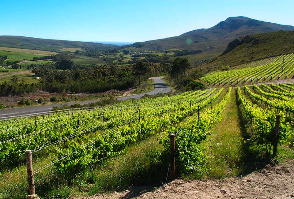Wine Farms in Hermanus