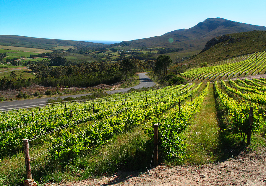 Stunning day throughout the Hemel-en-Aarde Valley