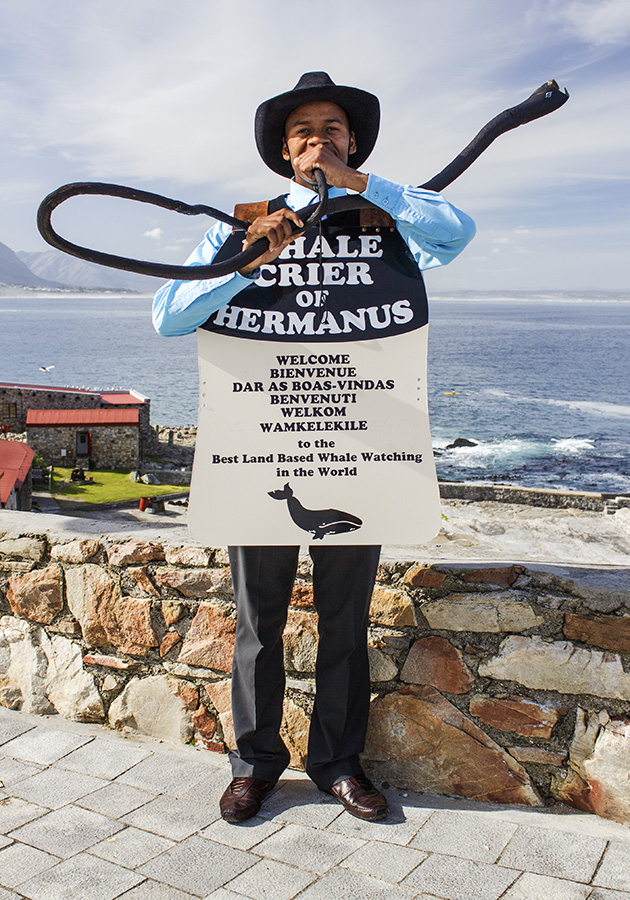 Whale Crier in Hermanus