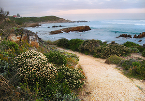 Cliff Path View
