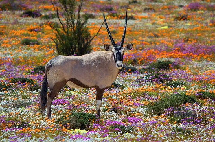 Hermanus blooms with flowers
